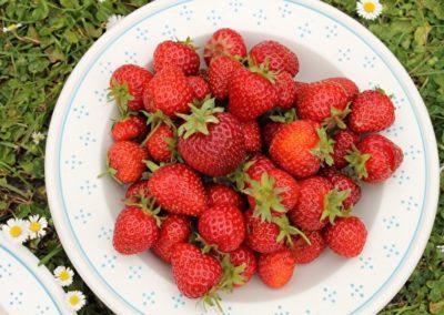 In Praise of Berries – for Sarah Raven